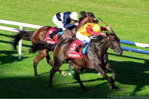 Snow Fairy Winning Irish Champion Stakes