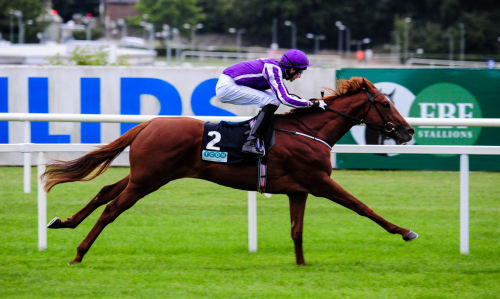 Australia Winning At Leopardstown